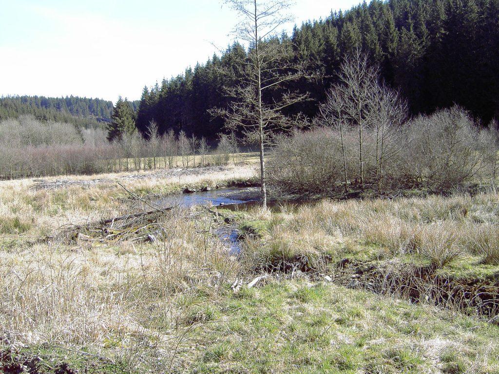 Perlenbach-Fuhrtsbachtal-Talsystem