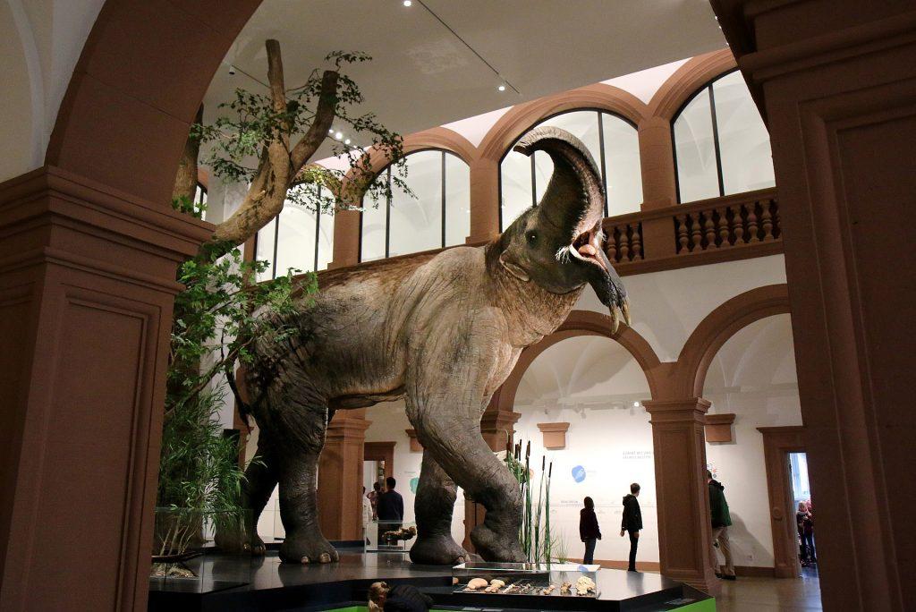 Mainz Natural History Museum