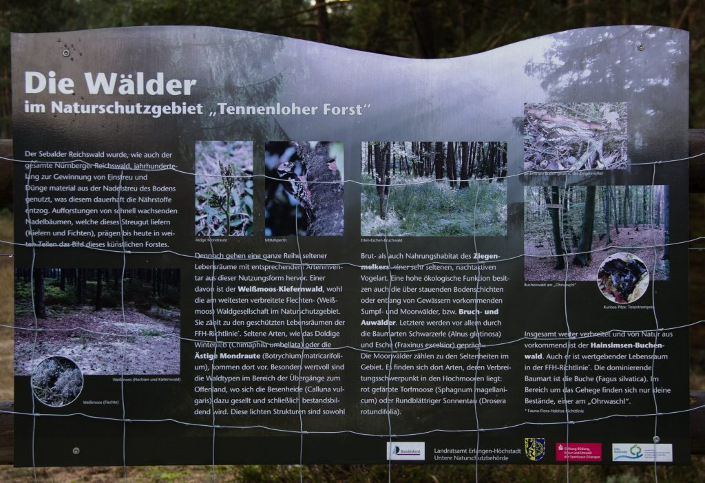 Tennenlohe Forest